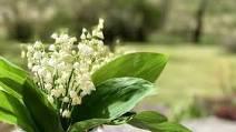 Communiqué de la Préfecture concernant la filière horticole et vente de fleurs et la vente de muguet le 1er mai