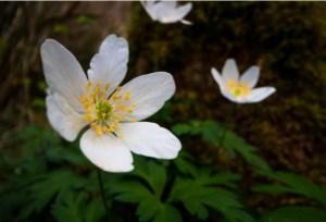 Maison du Parc national et de la vallée à Luz Saint Sauveur : Animations autour de la botanique