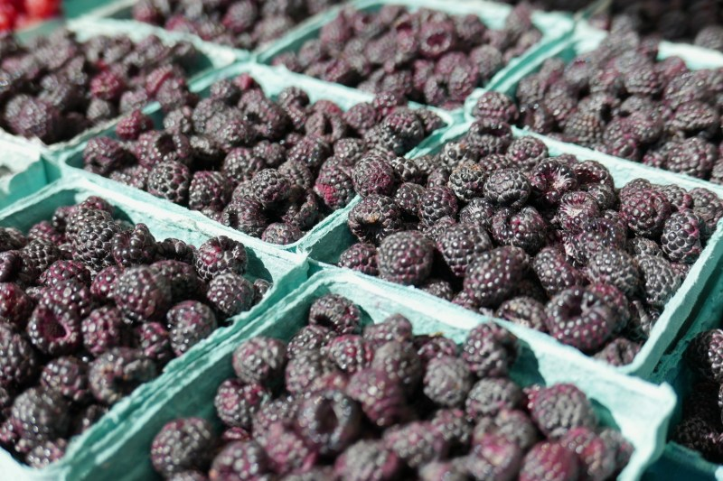 Blackberries from Mick Klug Farms