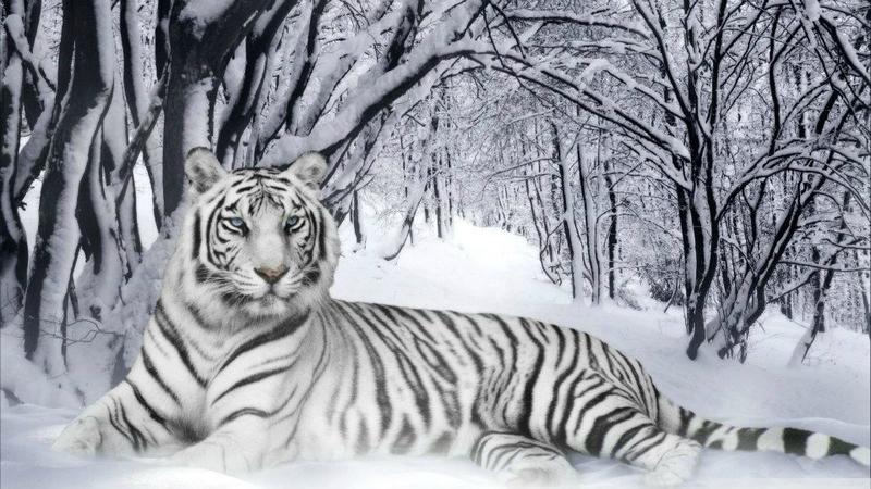 Les Prophéties du Tigre blanc de Marc-Louis Questin : un manifeste post-surréaliste ?
