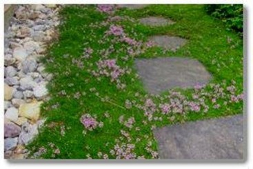 Awesome Small Garden Ideas With Stone Path 47