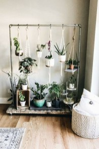 Affordable House Plants For Living Room Decoration 04