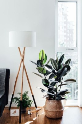 Affordable House Plants For Living Room Decoration 07
