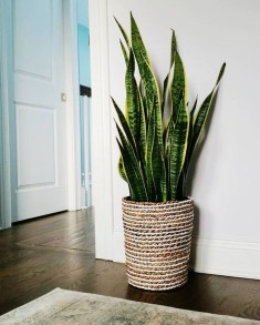Affordable House Plants For Living Room Decoration 10