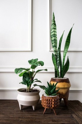 Affordable House Plants For Living Room Decoration 16