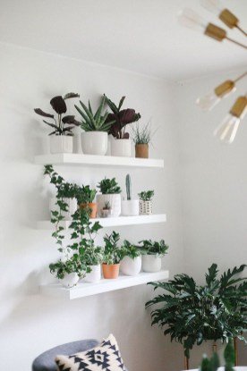 Affordable House Plants For Living Room Decoration 18