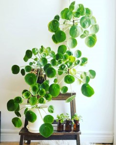 Affordable House Plants For Living Room Decoration 21