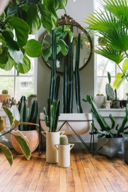 Affordable House Plants For Living Room Decoration 33