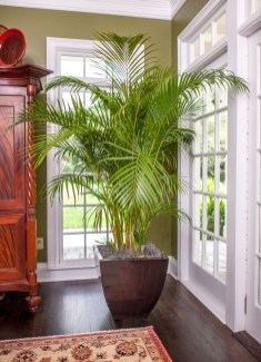 Affordable House Plants For Living Room Decoration 46