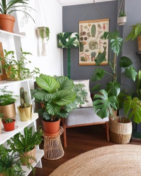 Pretty House Plants Ideas For Living Room Decoration 06