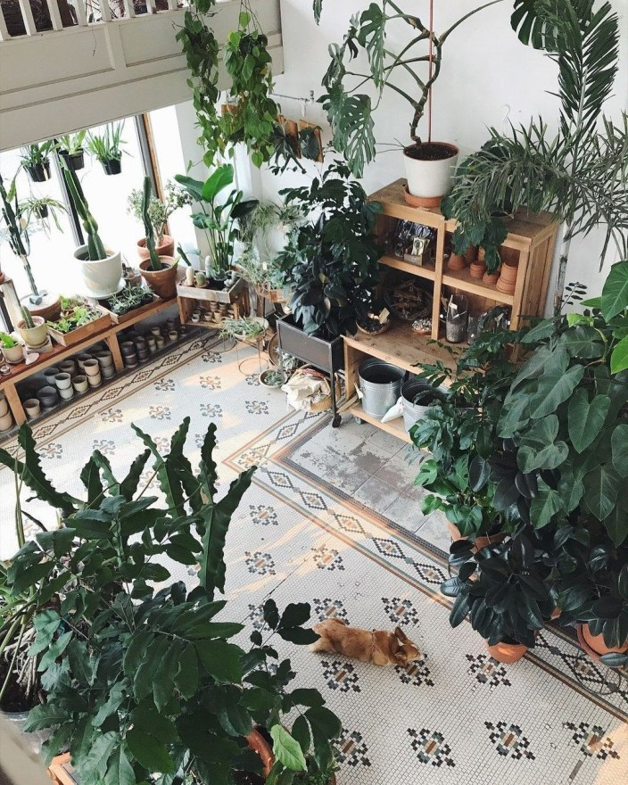 Pretty House Plants Ideas For Living Room Decoration 46