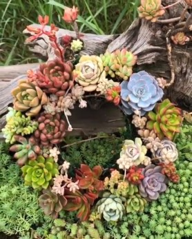 Awesome Succulent Garden Ideas In Your Backyard 25
