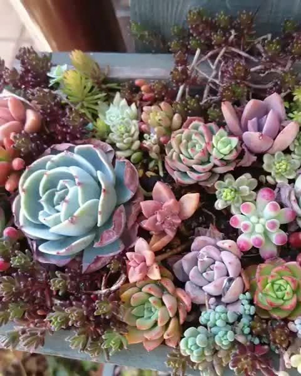 30 Awesome Succulent Garden Ideas In Your Backyard Lovahomy
