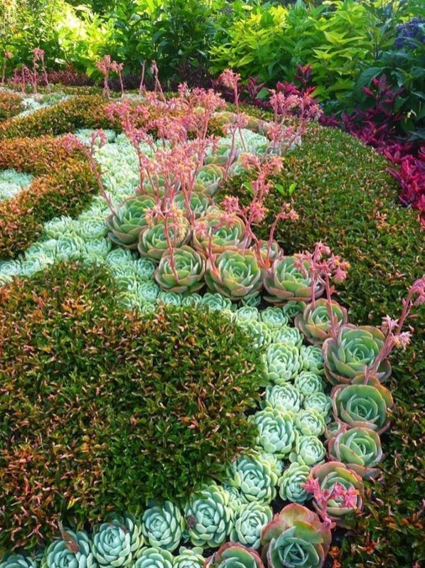 Awesome Succulent Garden Ideas In Your Backyard 48