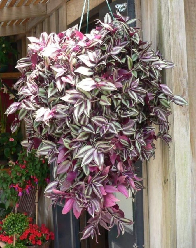 Lovely Hanging Flower To Beautify Your Small Garden In Summer 06