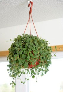 Lovely Hanging Flower To Beautify Your Small Garden In Summer 10