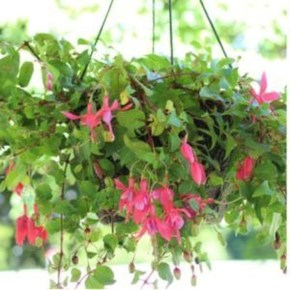 Lovely Hanging Flower To Beautify Your Small Garden In Summer 22