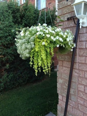 Lovely Hanging Flower To Beautify Your Small Garden In Summer 23