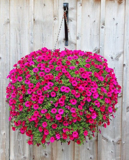 Lovely Hanging Flower To Beautify Your Small Garden In Summer 27
