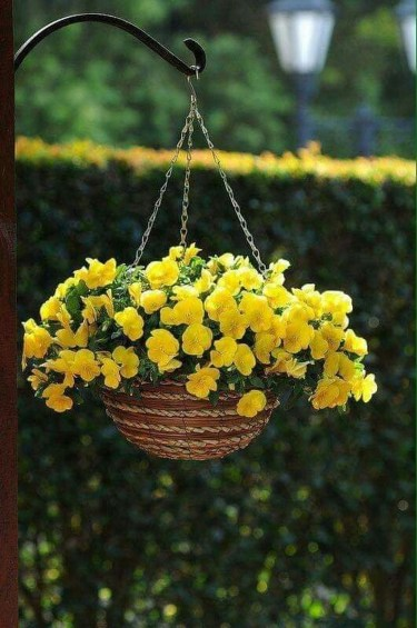 Lovely Hanging Flower To Beautify Your Small Garden In Summer 30