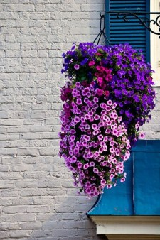 Lovely Hanging Flower To Beautify Your Small Garden In Summer 35
