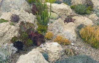 Elegant Indoor Rock Garden Ideas That Can Enhance Your Home Style 17
