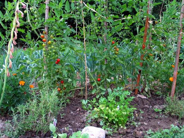 A lovely little garden c/o Wikimedia Commons