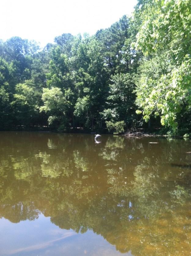 heron over lake