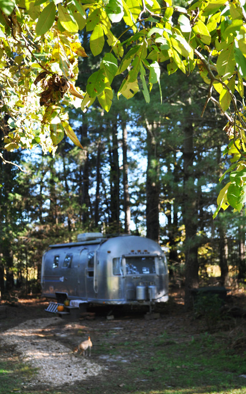 Airstream and leaves