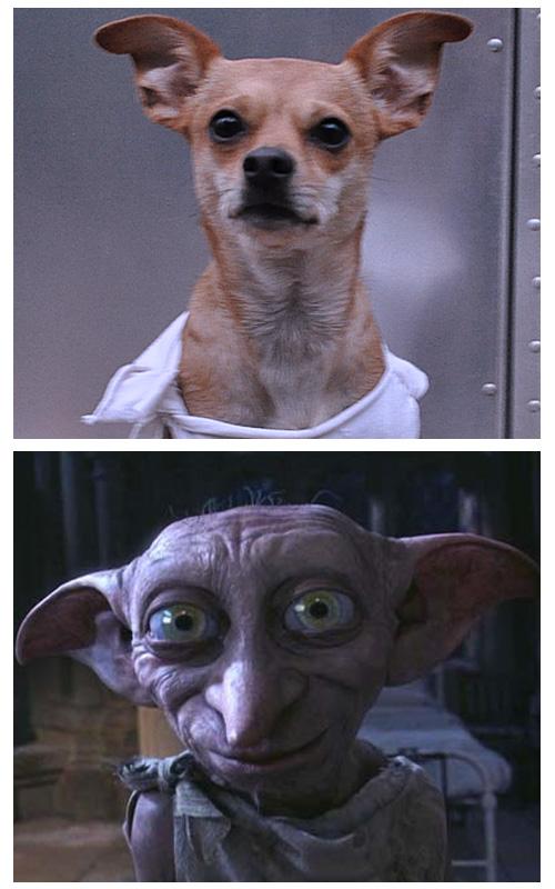 Dobby Dog Costume