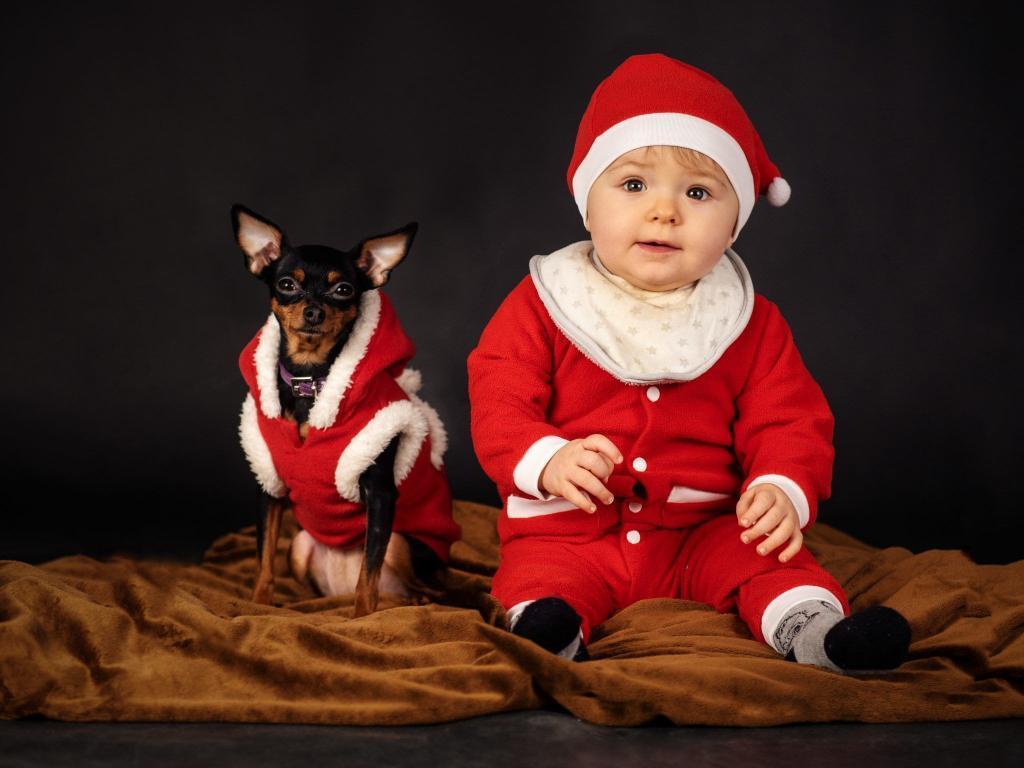 Babyshooting Hund Weihnachten