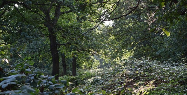 Discover the Great North Wood – south London's forgotten landscape