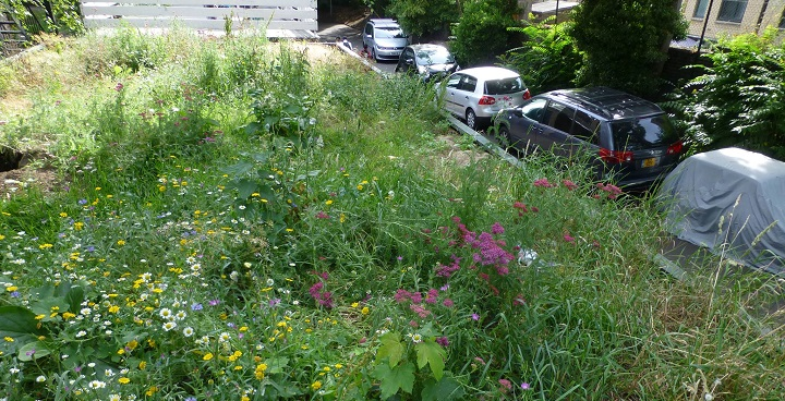 garage roof replanted as wildflower meadow on Calias Gate estate, North Lambeth