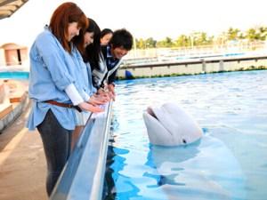 lagoon_zone_whale_list-011