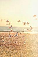 3-21 seagulls