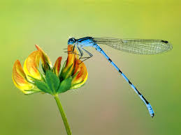 A dragonfly.