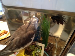 Oh how very interesting. This bird appears to be flying inside this odd bubbling enclosure.