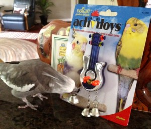 Someone with feathers checks out the shiny new musical accompaniment device his Grandma bought him.