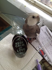 A small feathered therapist delivers a timely public service announcement.