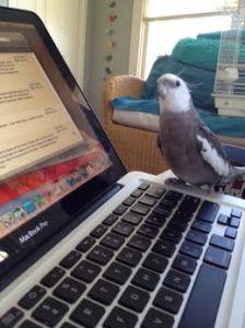 LaptopWork1