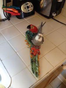 MacawPlate3