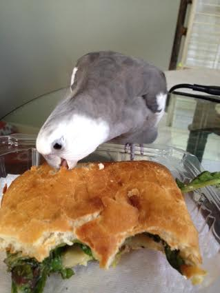 """He then administers his patented """"bite o' death,"""" sealing the panini's fate."""