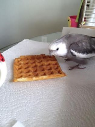 Whoa! When did this waffle get here? This is highly unusual.