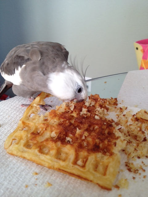 "When he is finished, there will be no trace of the species once known as ""the waffle."""