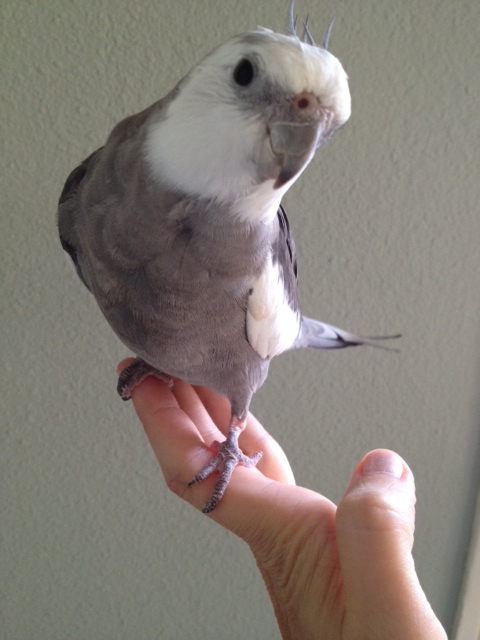 """Here, the """"Special Needs"""" Spokesbird demonstrates obvious acting talent (proving again that the camera loves him)."""