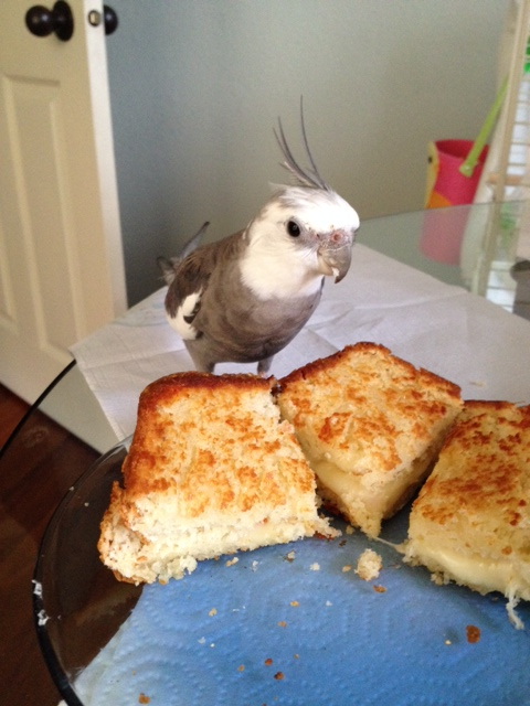 "A fan photo ""with grilled cheese"" during my rare ground-side visit? Sure, Mom - anything for my fans!"
