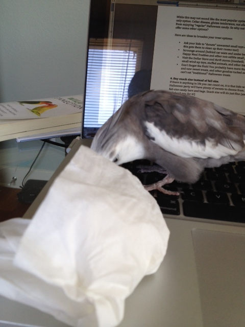 """Nothing personal, okay?  I am just following the """"white square code of the feathery beings."""""""