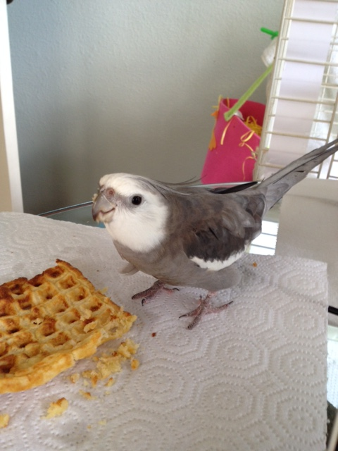 "And for the photo shoot finale - ""Cute Bird....with Waffle."""