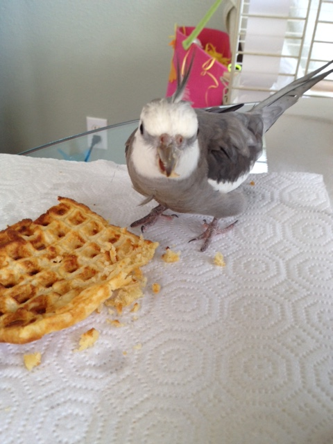 "We'll call this one ""Ferocious Bird, Crunchy Waffle."""