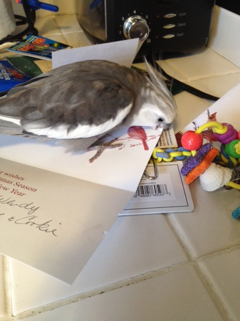 "This thick paper is extra scrumptious....has a great ""beak feel"" (a technical term)."